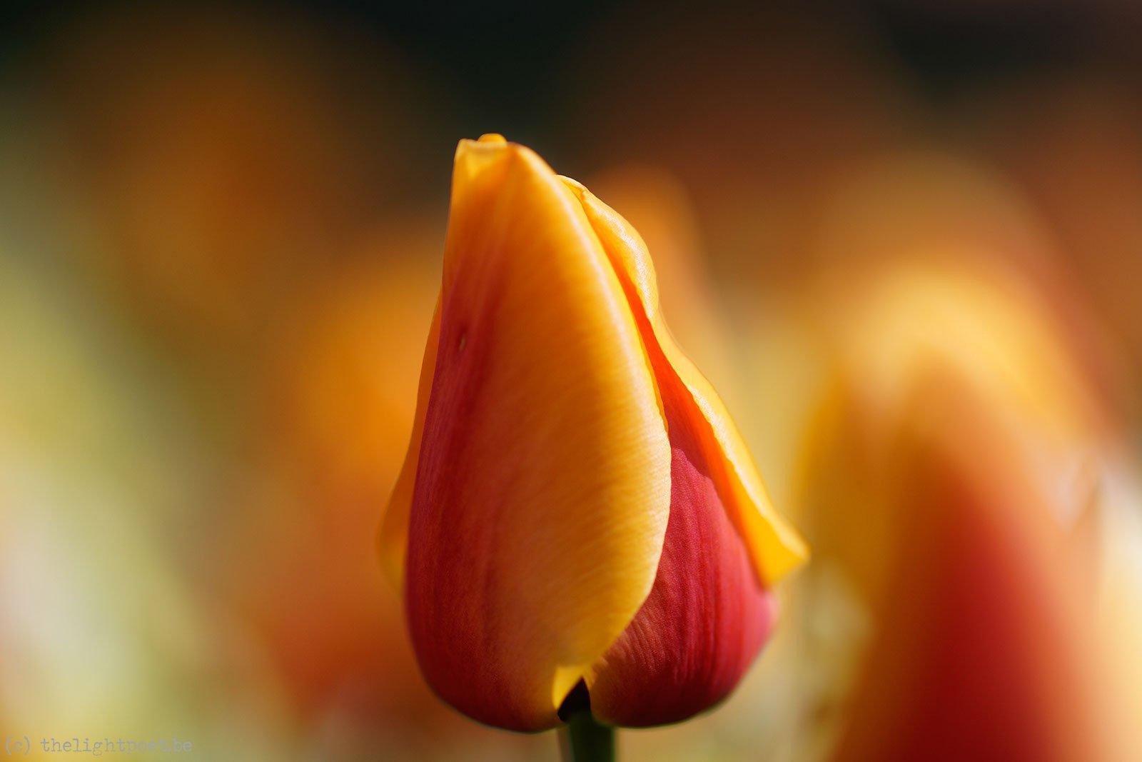 2015_04_Floralia_20150419_110028_DxO_v10
