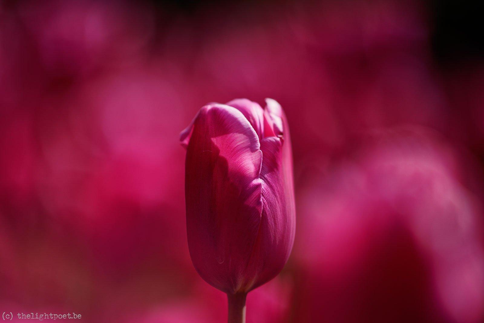 2015_04_Floralia_20150419_110302_DxO_v10
