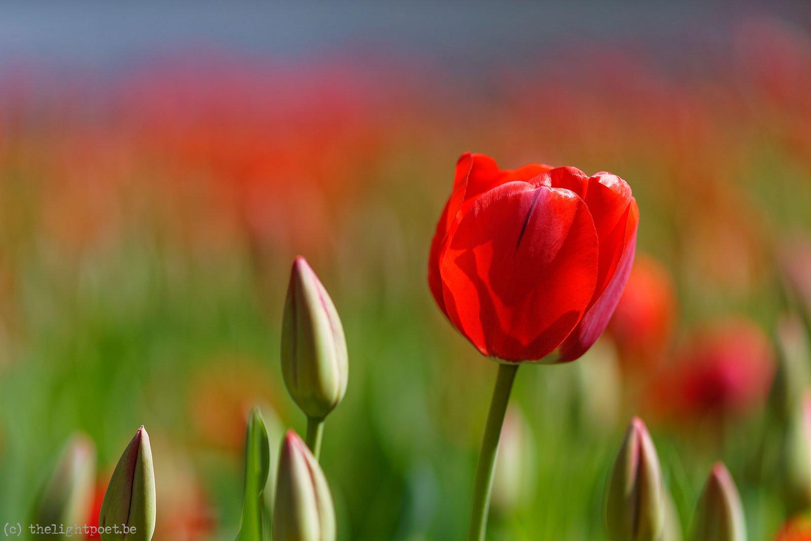 2015_04_Floralia_20150419_113121_DxO_v10