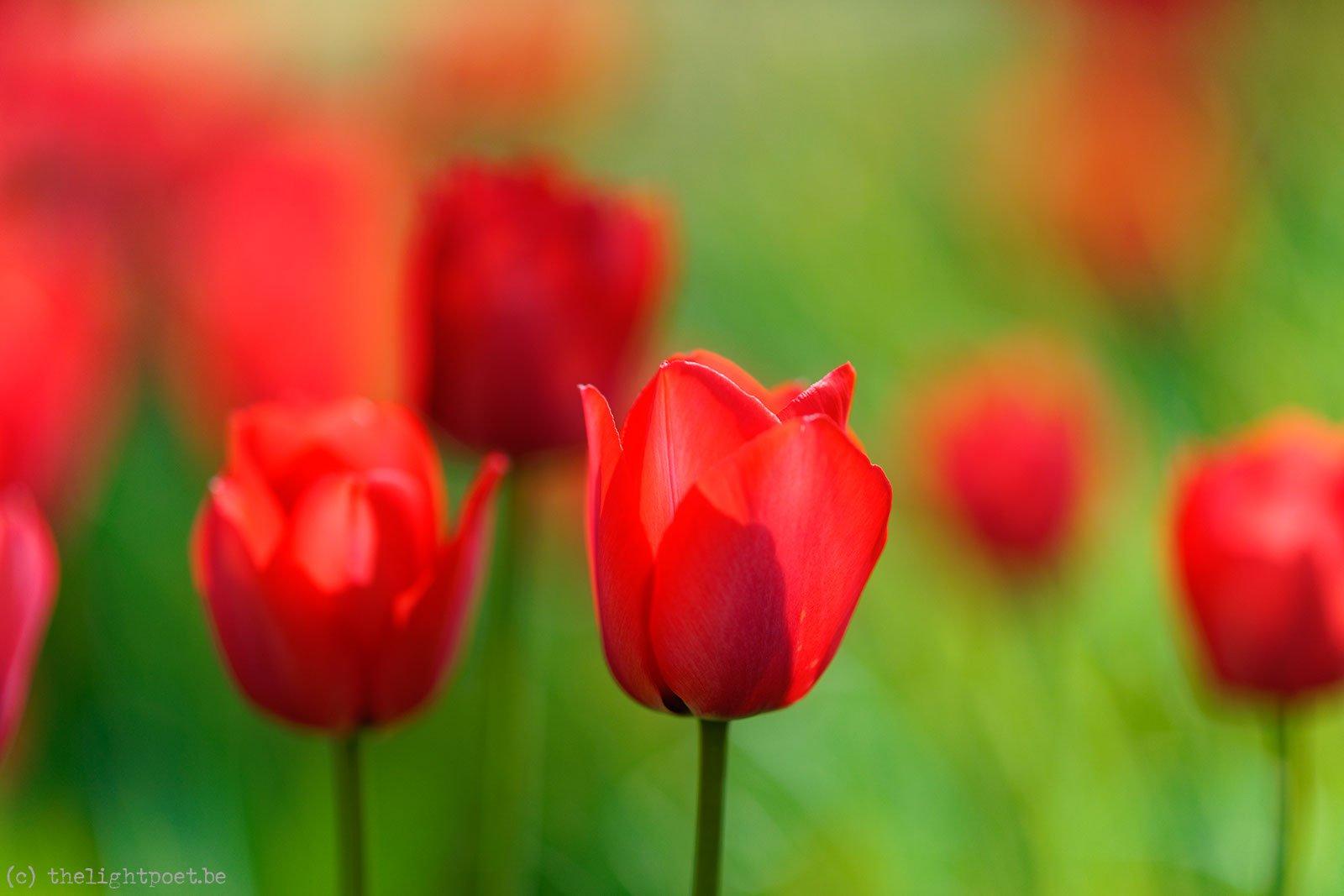 2015_04_Floralia_20150419_113924_DxO_v10_1