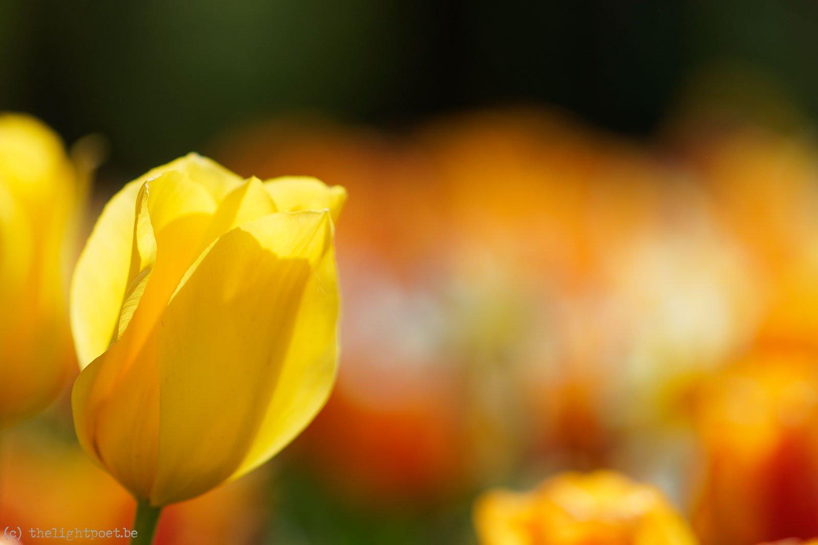 2015_04_Floralia_20150419_114915_DxO_v10