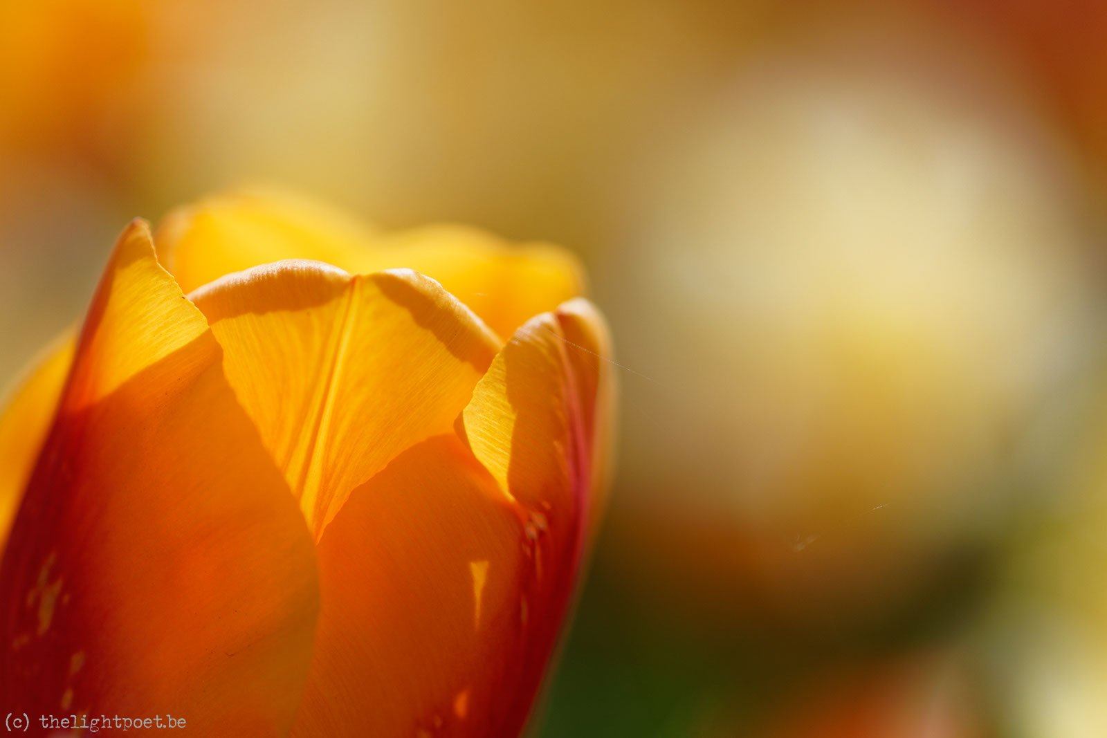 2015_04_Floralia_20150419_114940_DxO_v10