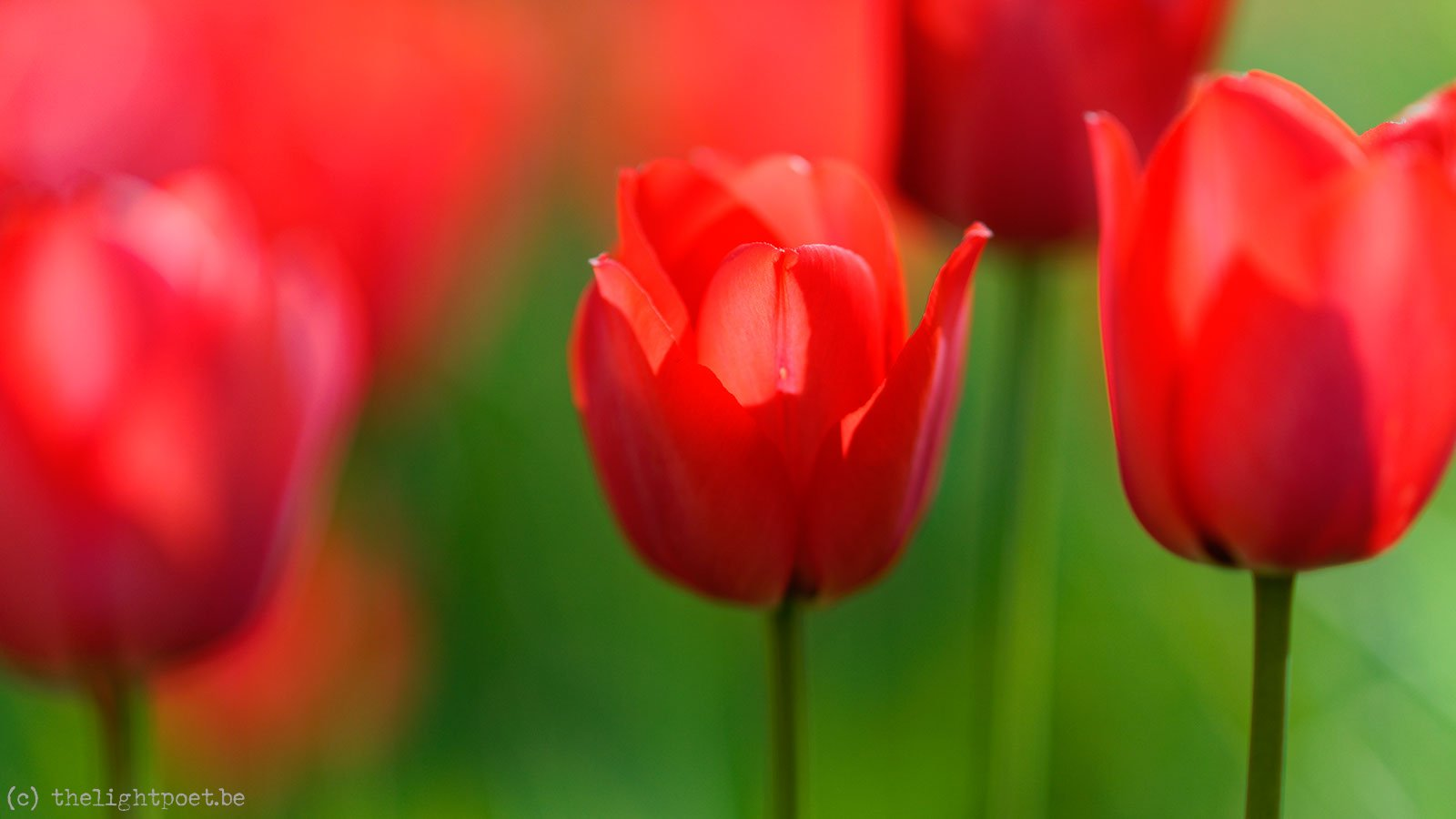 2015_04_Floralia_20150419_113948_DxO_v10_2