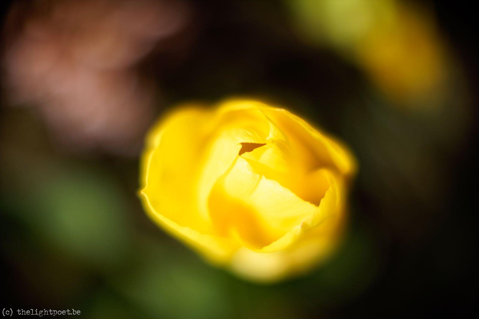 2016_04_Floralia_20160419_140945_DxO_v10
