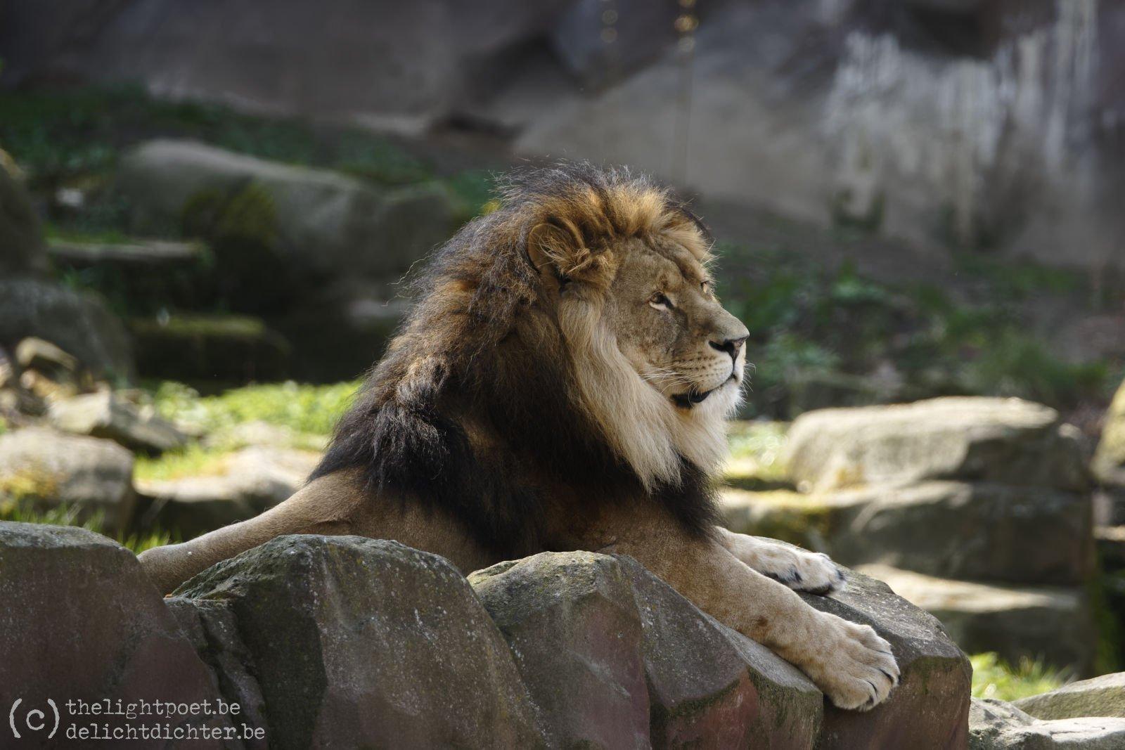 2019_04_Zoo_20190407_135044_DxO_PL2_1600px