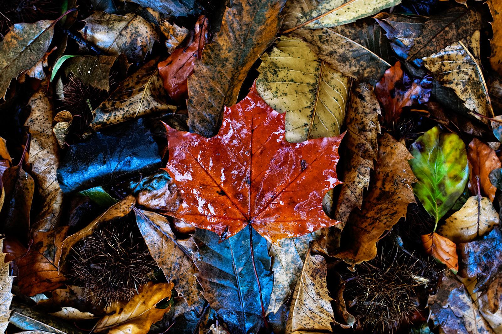Fall, November 2013